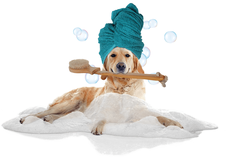 https://www.patasparriba.com/wp-content/uploads/2020/05/Bath-Totally-Mutts-Pet-Groomer-Wa-Vancouver-98682-dog-groomer.png